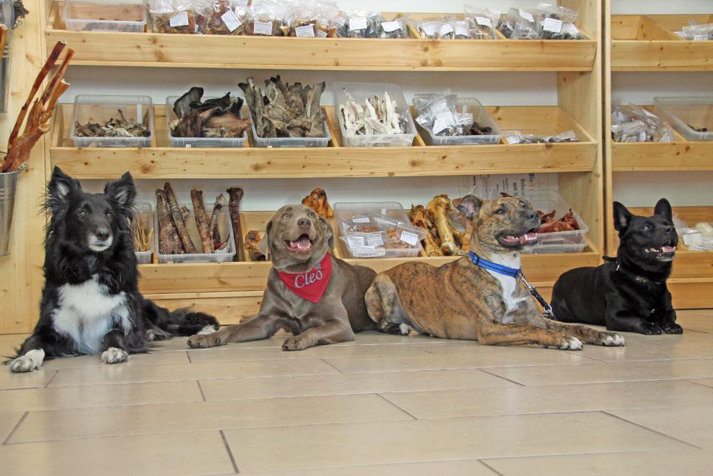 Hunde im Blori BARF Laden